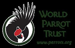 non-toxic parrot toys
